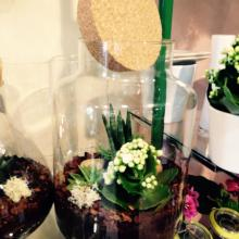 Confection terrariums